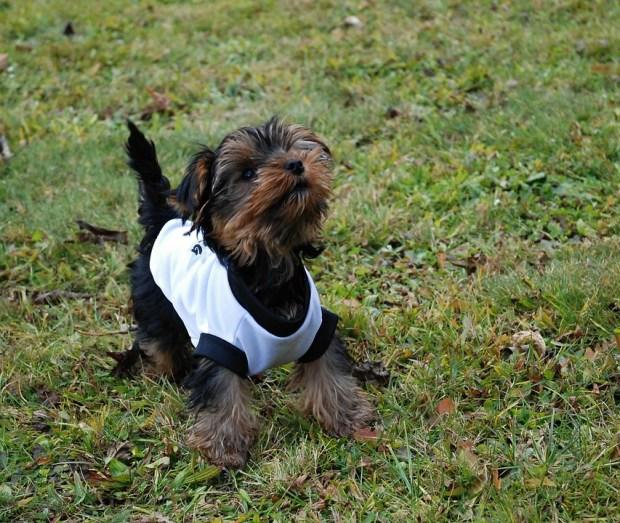 ubrania dla psa