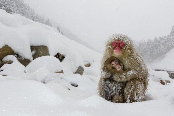 Победители World Press Photo — лучшие фотографии мировой ...