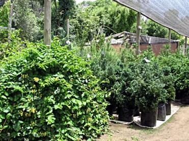 24_jardinesMaitencillo