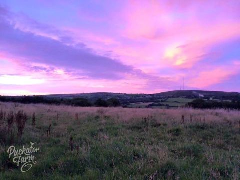 Sun set at Puckator Farm