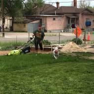 Denise cutting grass