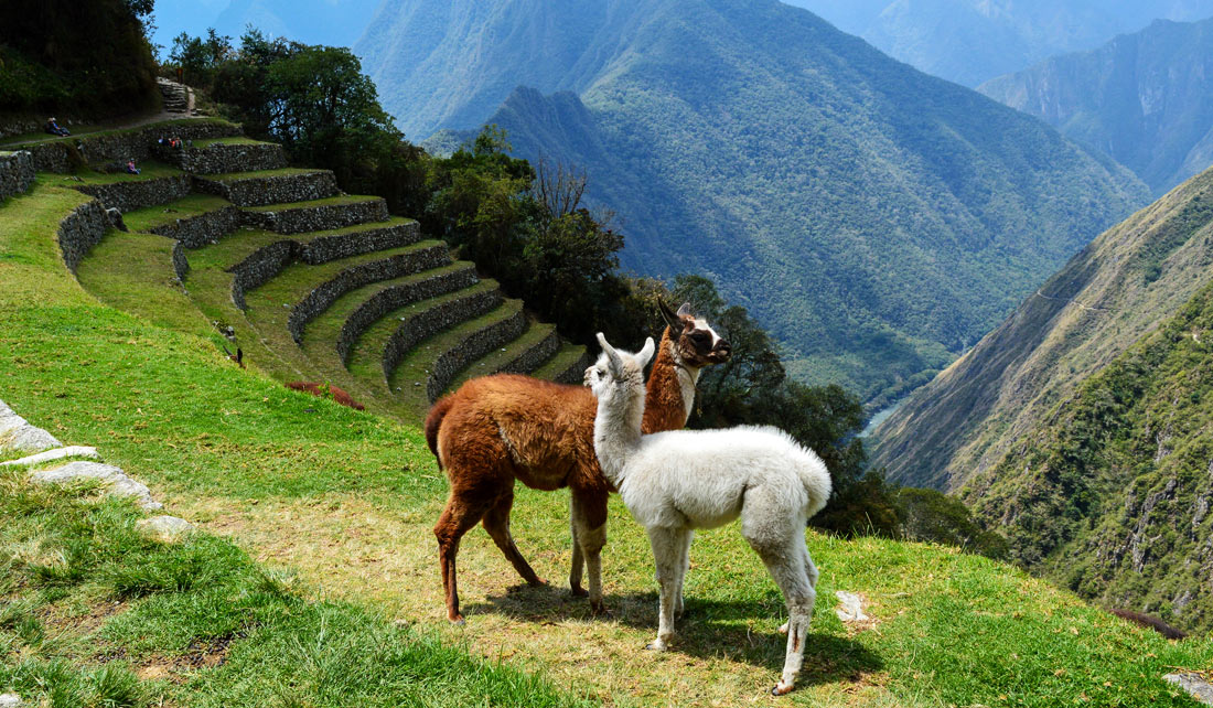 Wiñayhuayna - Camino del Inca