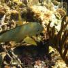 snorkeling-5b
