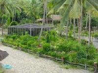 Butterfly Garden structure amid landscaped garden pathways at Puerto Beach Resort