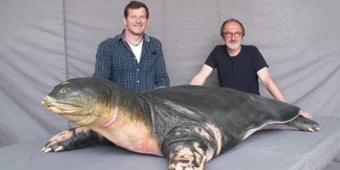 """Präparat der größten und seltensten Süßwasserschildkröte in Hanoi präsentiert: Zwei deutsche Präparatoren konservierten die """"Heilige Schildkröte"""" von Vietnam"""