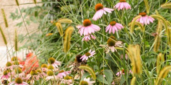 Mitmachen bei Erfurts Blumenschmuck- und Vorgarten-Wettbewerb