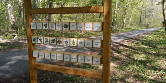 eine Holztafel im Wald zeigt verschiedene Lebewesen und Pflanzen des Waldes und ihre Namen