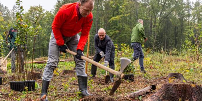 mehrere Personen bearbeiten Waldboden mit Kreuzhacken
