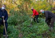 drei Männer mit Spaten in der Hand graben Löcher für Baumpflanzungen in einem Wald