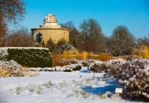 Grün durch den Winter – Tipps für Garten und Balkon