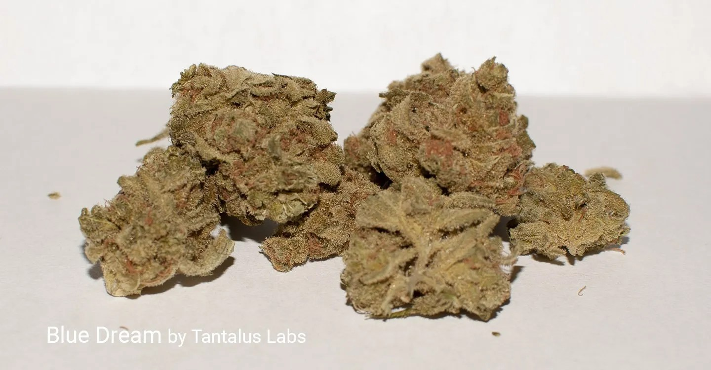 Blue Dream strain by Tantalus Labs