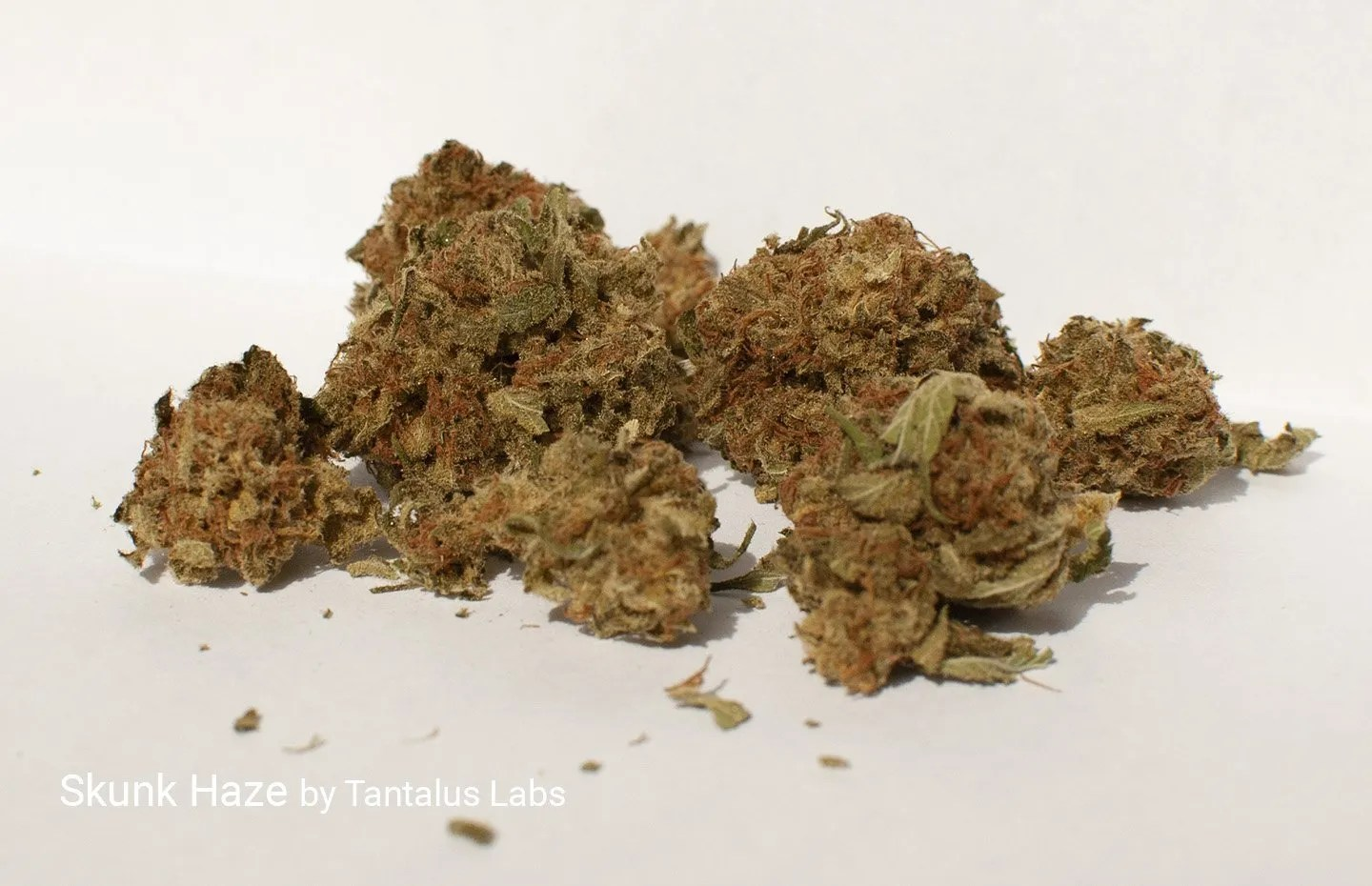 4.58% THC 7.88% CBD Skunk Haze by Tantalus Labs