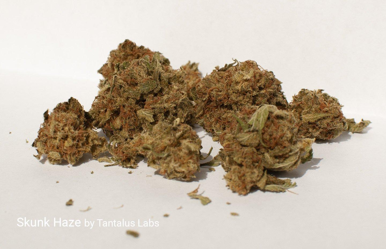 4.58% THC 7.88% CBD Skunk Haze by Tantalus Labs
