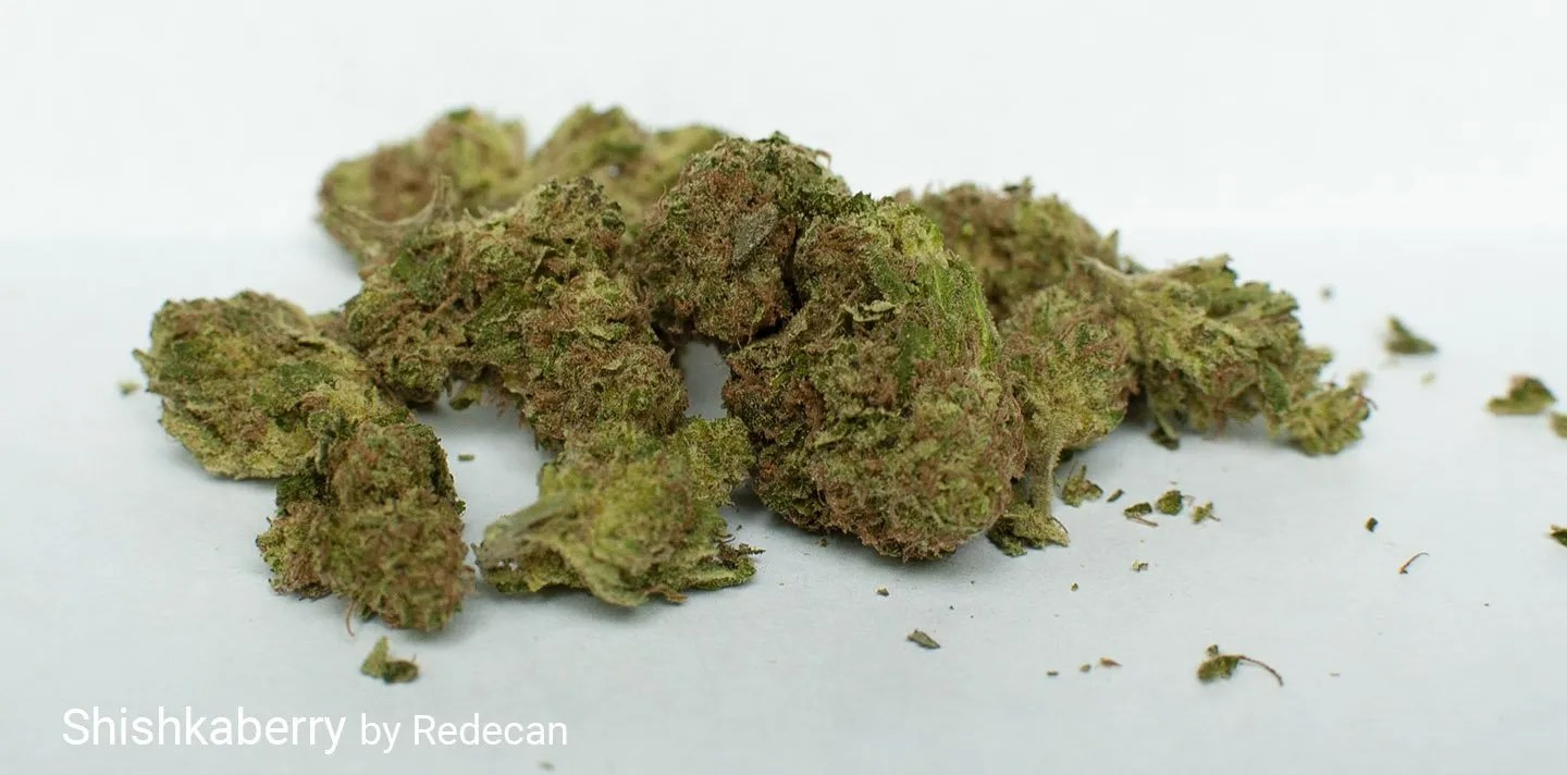 16.5% THC Shishkaberry by Redecan