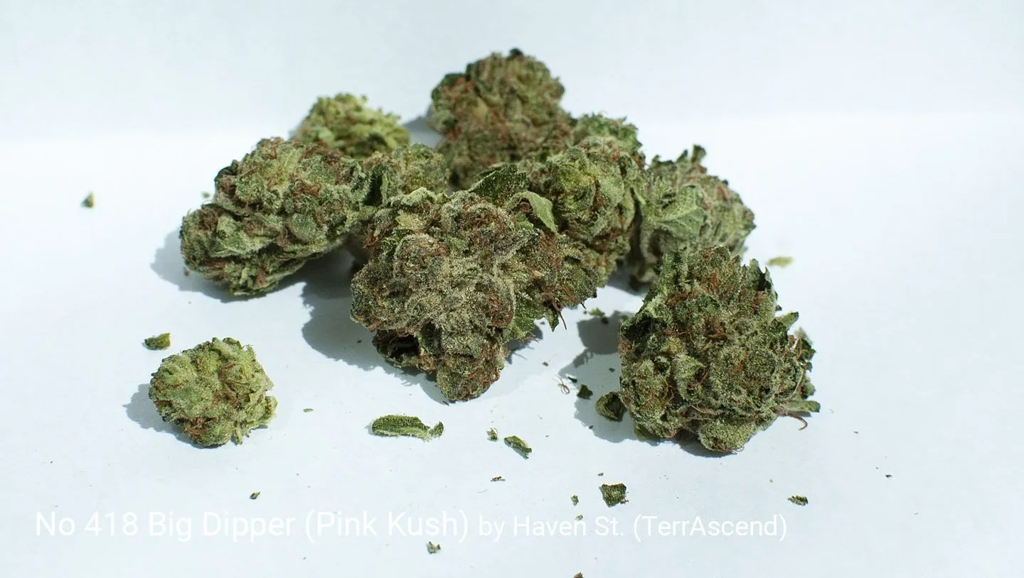 18.42% THC Big Dipper (Pink Kush) by Haven St. (TerrAscend)