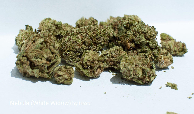 15.53% THC Nebula aka White Widow by Hexo
