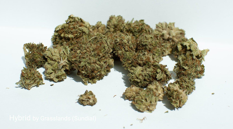 17.7% THC Hybrid by Grasslands