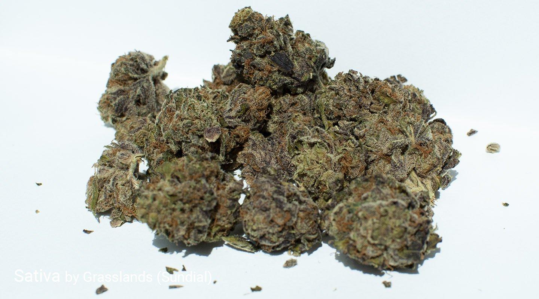 16.4% THC Sativa by Grasslands