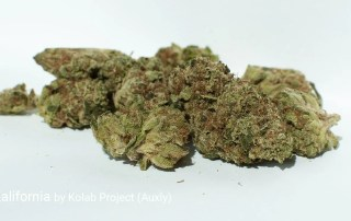 24.65% THC Kalifornia by Kolab Project