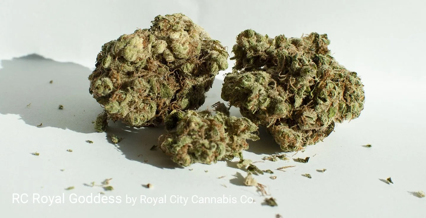 17.46% THC Royal Goddess by Royal City Cannabis Co.