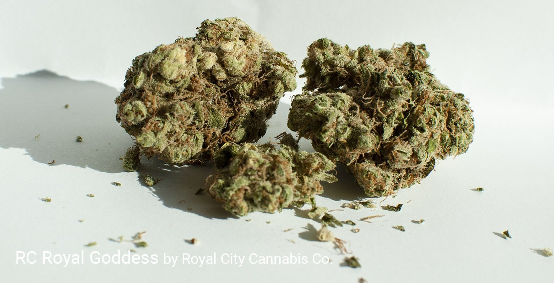 17.46% THC Royal Goddess by Royal City Cannabis Co.