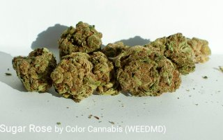 20.68% THC Black Sugar Rose by Color Cannabis