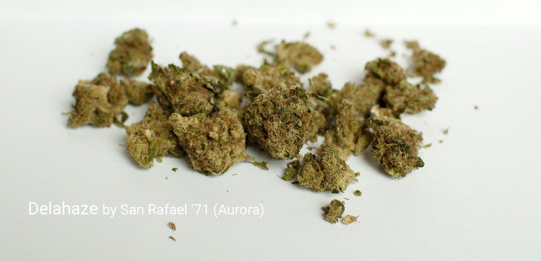 21.69% THC Delahaze by San Rafael '71