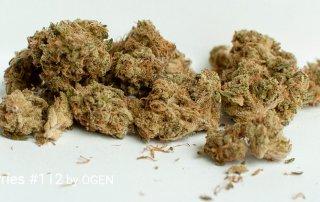 19.1% THC Gas Berries #112 by OGEN