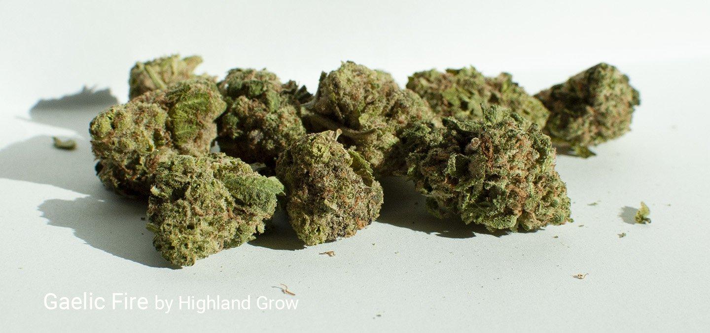 24.6% THC Gaelic Fire by Highland Grow