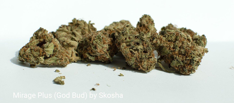 24.7% THC Mirage Plus (God Bud) by Skosha