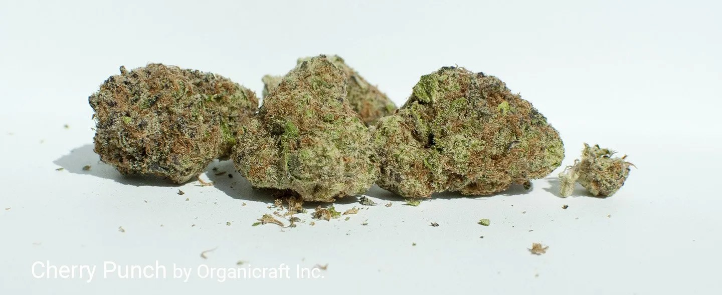 23.05% THC 3.49% Terpenes Cherry Punch by Organicraft