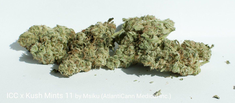 24.7% THC ICC x Kush Mints 11 by Msiku