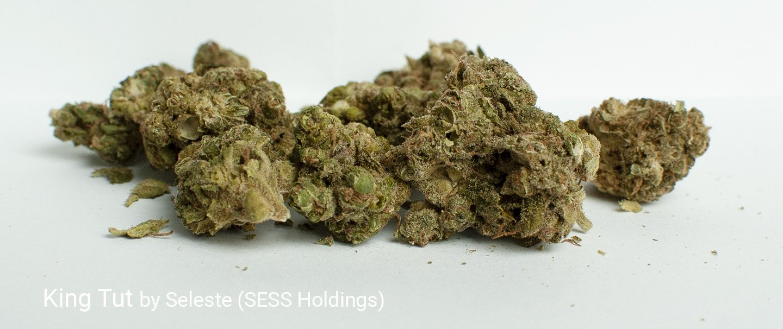 20.23% THC King Tut by Seleste