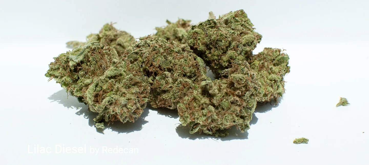 19.2% THC Lilac Diesel by Redecan