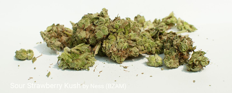 22.4% THC Sour Strawberry Kush by Ness