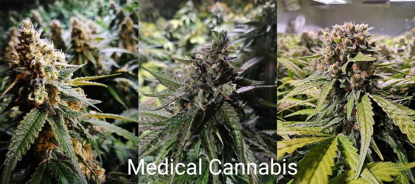 Micro-Craft Medical Cannabis from LuxCrop