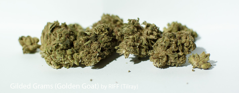 23.824% THC Gilded Grams (Golden Goat) by RIFF