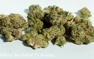 23.82% THC Lemon Rocket by San Rafael '71