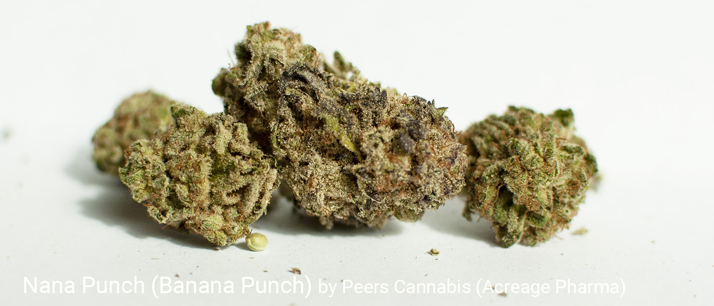 23.71% THC Nana Punch by Peers Cannabis