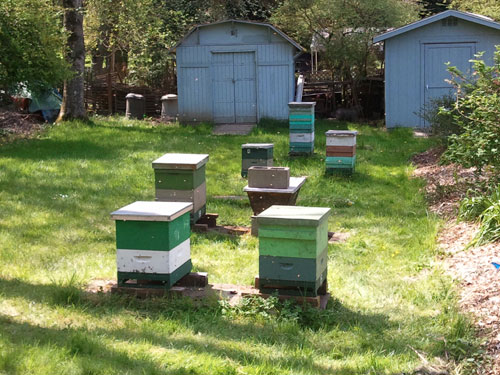 PSBA Apiary at Graham Visitor Center in the UW Arboretum