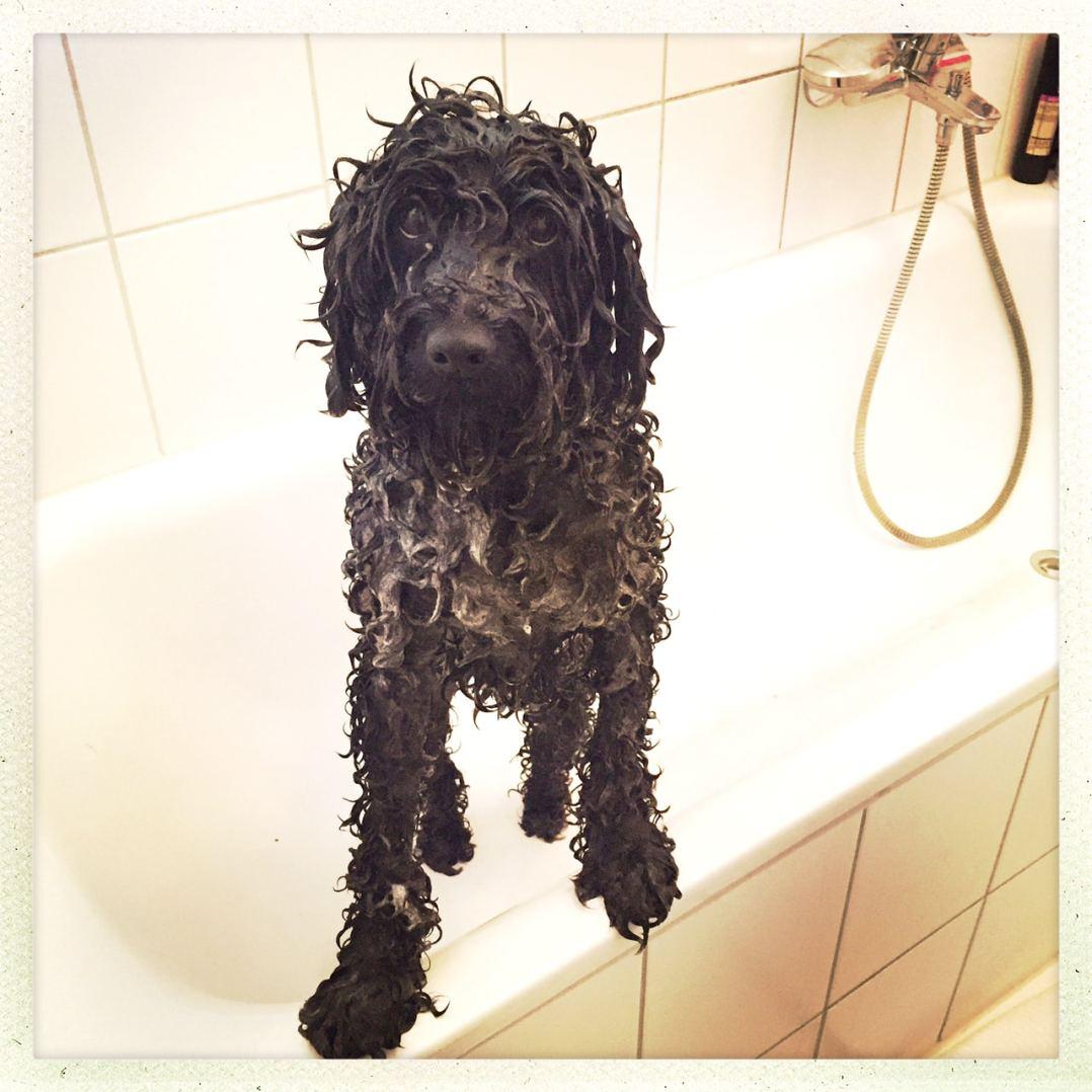 Puli waschen