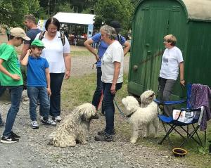 Puli Event Bad Sobernheim Selten Rassen Im Gespraech