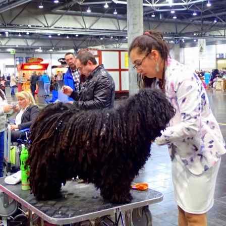 World dog show Leipzig 2018 Vorbereitung