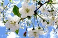 fruehlingsblumen_beschnitte