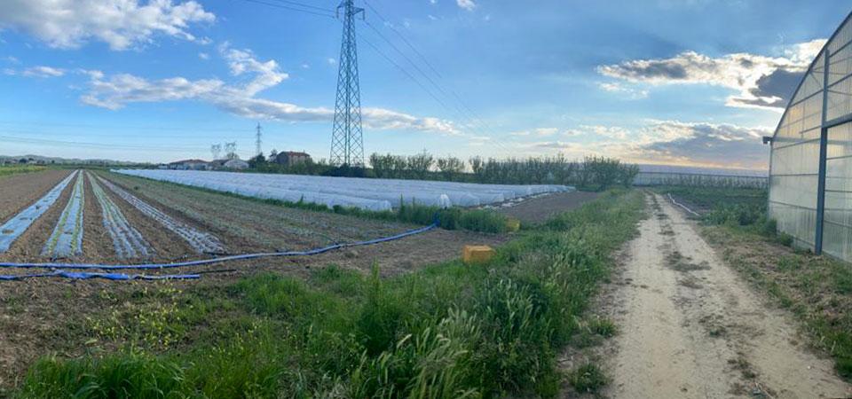 Pasquini e Ridulfo - Pulmino contadino