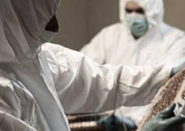 THC - miele del carcere massa marittima - pulmino contadino