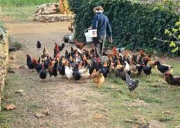 Emilia ele sue galline - Il Tosteto, Pitigliano