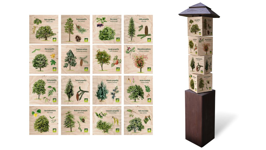KW-6 - Gra edukacyjna kostki wiedzy - lisciaste, iglaste, krzewy, owoce lesne