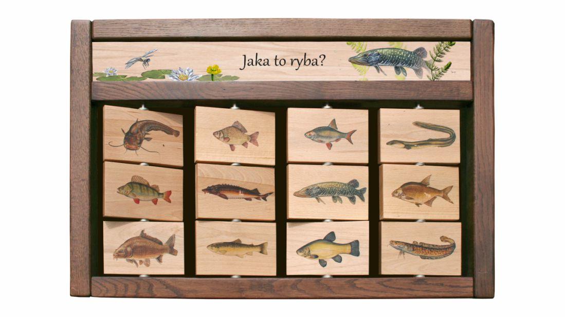 ZIDM-10 - Tablica interaktywna - Jaka to ryba