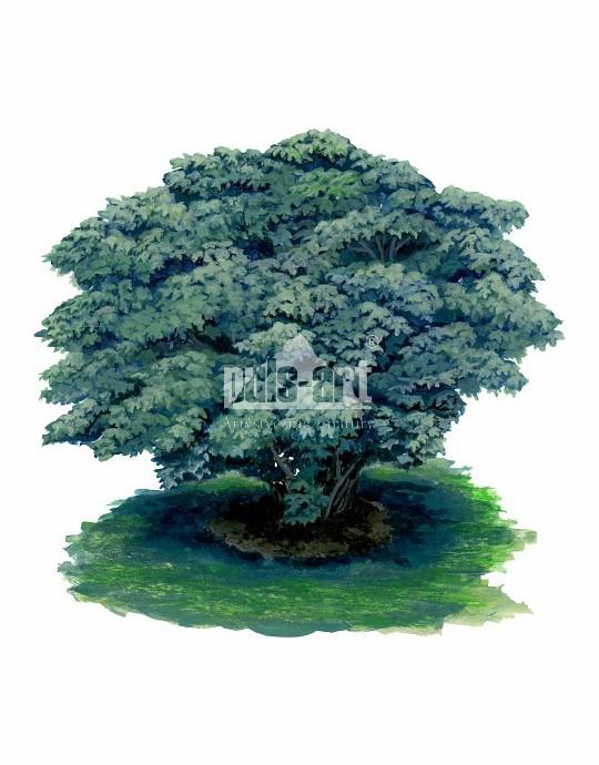 Figowiec pospolity (Ficus carica)